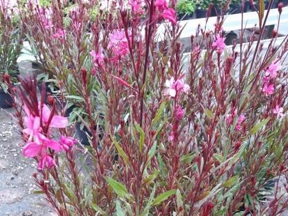 Blumen in Beet. (Foto: Robert Wotapek).