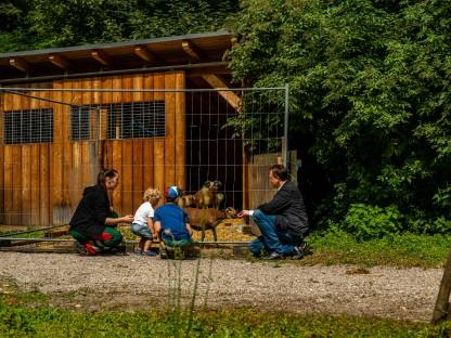 Kamerunschafe in einem Gehege im Hammerpark, davor zwei Kinder und zwei Erwachsene. (Foto: Arman Behpournia)