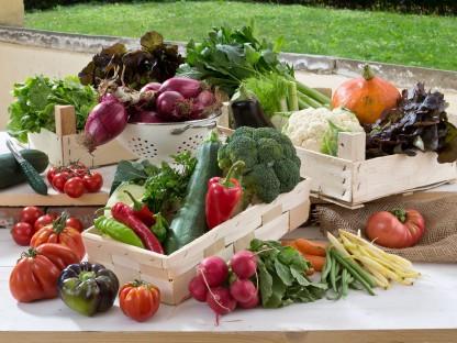 Verschiedenes  frisches Gemüse in Holzkisterl auf Tisch schön drapiert. (Foto: Werner Jäger).