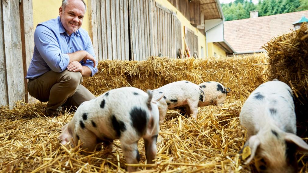Der Landwirt sitzt im Stell bei seinen Schweinen. Foto: Josef Kranawetter