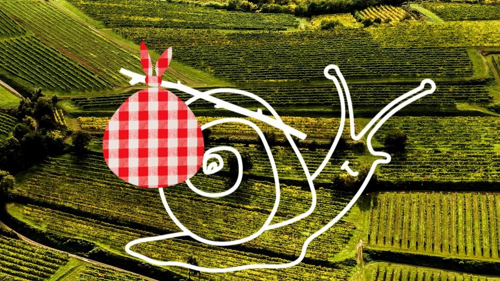 Logo WeinBergSchmecken-Traisentaler Winzer