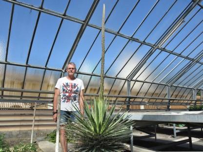 Erneut botanische Sensation in der Stadtgärtnerei