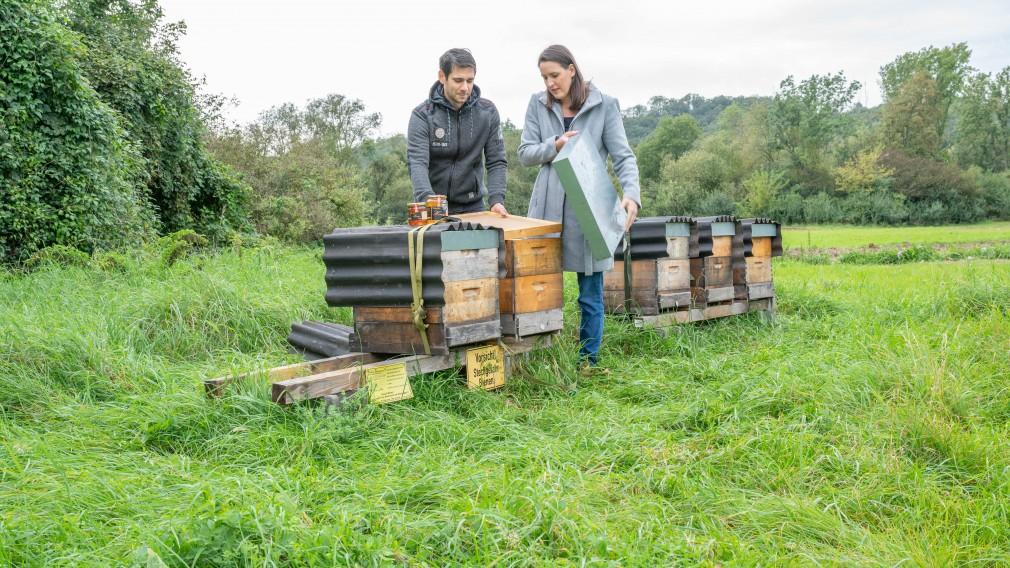 Zwei Personen stehen mitten in der Natur bei Bienenstöcken und öffnen einen Bienenstock.