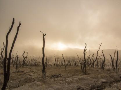 Tote Bäume. (Foto: Pixabay/Free-Photos)