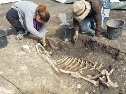 Eine Frau und ein Mann beim Freilegen eines Skeletts. (Foto: Stadtarchiv St. Pölten)