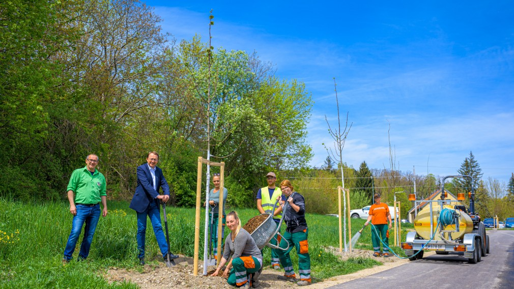 An einem Radweg wurden Jungbäume gepflanzt. Neben den Bäumen stehen Mitarbeiter der St. Pöltner Stadtgärtnerei und der Bürgermeister der Landeshauptstadt. Ein
