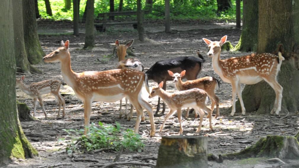 Tierischer Nachwuchs im Stadtwald